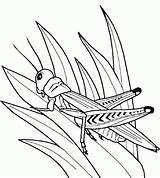 Coloring Grasshopper Insect Bug Template Grasshoppers Kleurplaten Krekel Kleuren Bugs Praying Mantis Insecten Kinderen Zomeractiviteiten Tekeningen Popular sketch template