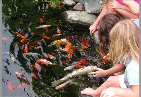 popular types  backyard pond fish