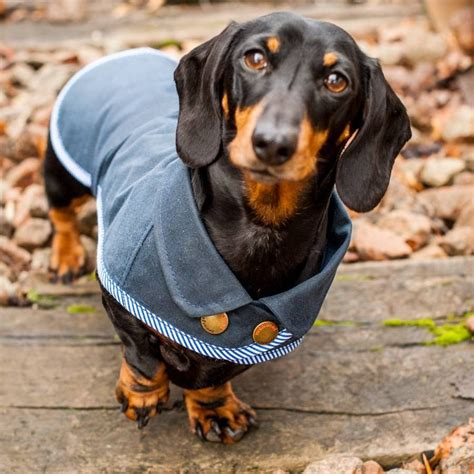 Dachshund waterproof dog coat by redhound for dogs | notonthehighstreet.com