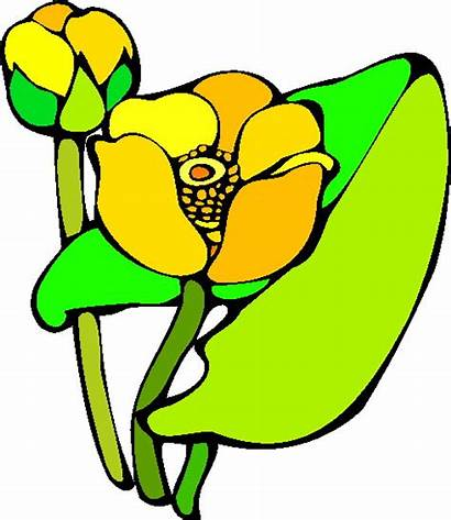 Lily Water Clip Clipart Easter Animated Lilies