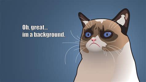 grumpy cat  great im  background wallpapers