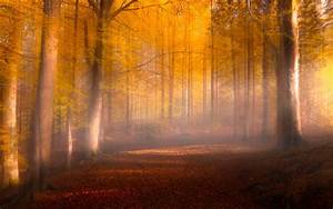 Nature, Landscape, Fall, Leaves, Forest, Sunrise, Mist, Path, Trees, Sunlight, Yellow, Red