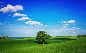广阔的草原风景壁纸图片大全_第015张图片