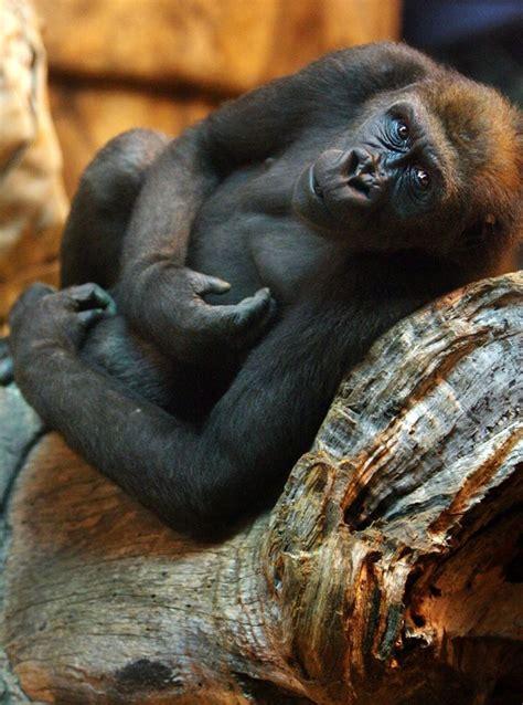 zoo pretoria south africa pta roomsforafrica