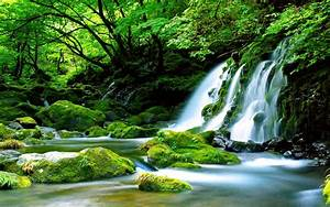 Green, Waterfall, River, Rocks, Covered, With, Green, Moss, Forest