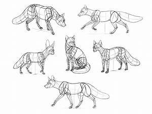 35 Fox Anatomy Diagram