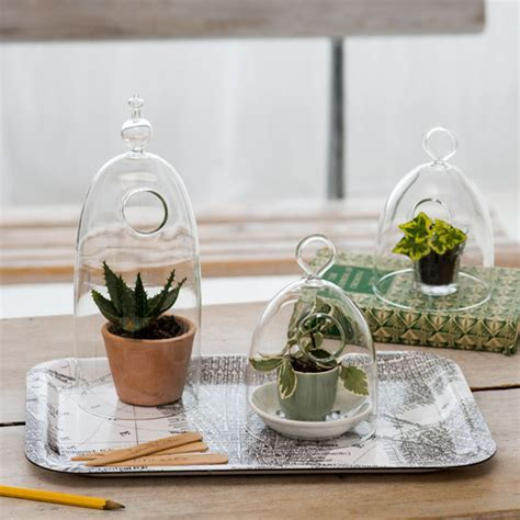 succulent and cactus displays   Ideal Home