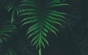 nw44-leaf-tree-dark-nature-wallpaper