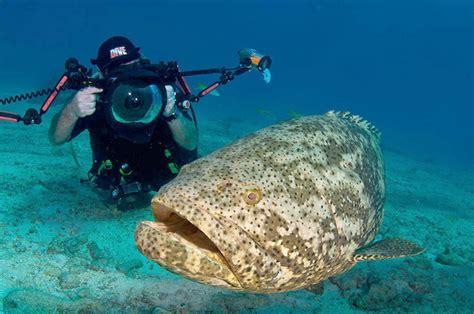 jewfish its florida