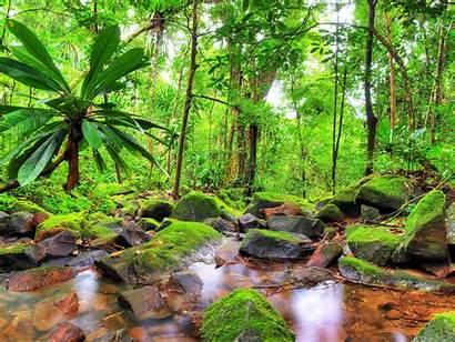 Jungle Tropical Windows Desktop Stones Exotic Landscape
