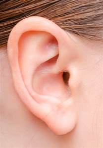 earrings s 8 interesting facts about human ears