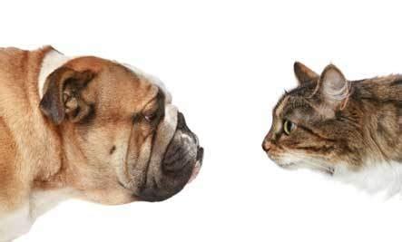 dog  cat  pet   cammy