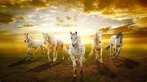 Sunset with horses wallpapers and images - wallpapers ...