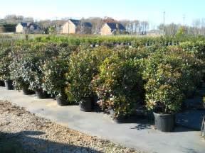 Atlanta Plant Nursery shrubs atlanta georgia landscaping company