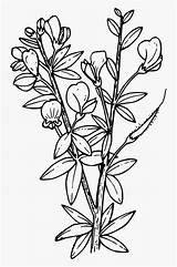 Larkspur Coloring Pages Clipartkey sketch template
