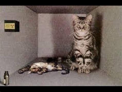 Le chat de Schrodinger. ( explication) - YouTube