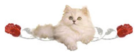gatte persiane la riproduzione dei gatti calore sterilizzazione parto