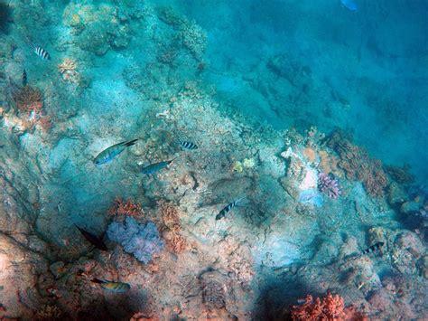 Beautiful Fish In The Ocean Floor Public Domain Free
