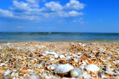 sea shells seaside  photo  pixabay