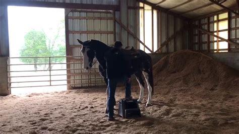 horse gaited mix draft