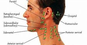 Lymph Glands In The Head