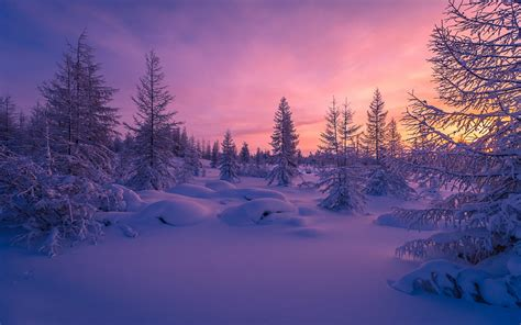 Background Images Snow by Wallpaper Winter Forest Snow Scenery Nature 4344