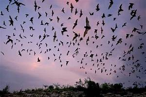 Night-Time Bat Adventure - Hopewell Culture National ...