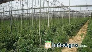 Comment Tuteurer Les Tomates : astuces pour cultiver la tomate 1 2 youtube ~ Melissatoandfro.com Idées de Décoration