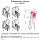 Боль в голени спереди и тазобедренном суставе