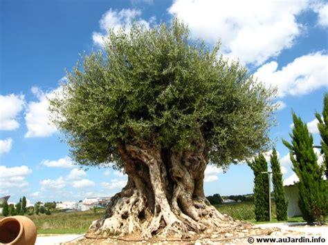 la cuisine d olivier les maladies de l 39 olivier