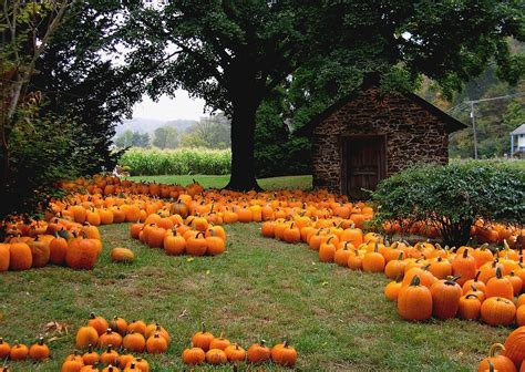 Growing Pumpkins Guide How To Grow Pumpkins + Pro Tips