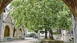 Les Plus Beaux Arbres Pour Le Jardin : la d couverte des plus beaux arbres d 39 le de france ~ Premium-room.com Idées de Décoration