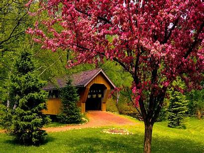 Spring Desktop Forest Wallpapers Covered Country Rosa