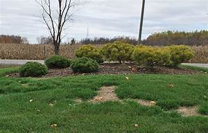 Semer Gazon Periode : le semis de gazon en p riode de dormance jardin2m ~ Melissatoandfro.com Idées de Décoration