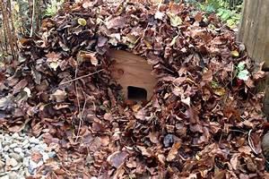 Igel Im Garten : igel im garten ein nachtaktiver n tzling igelhaus ~ Lizthompson.info Haus und Dekorationen