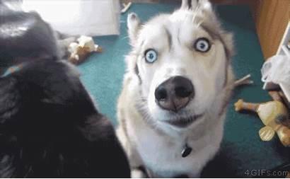 Friend Funny Husky Dogs Head Don Talk