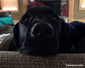 Surprised Dog GIF - Find & Share on GIPHY