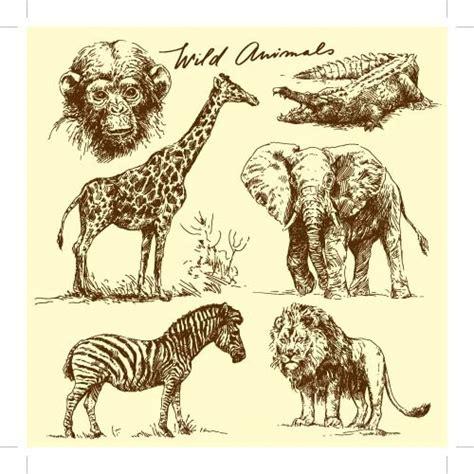 animal cartoon drawings  vector