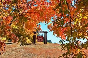 A Taste of Oak Glen – California Fall Color  Fall