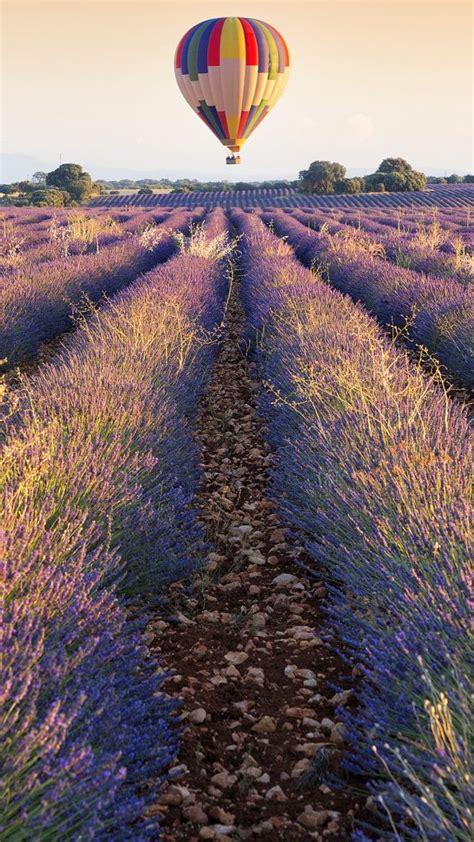 balloon  lavender plantation brihuega guadalajara