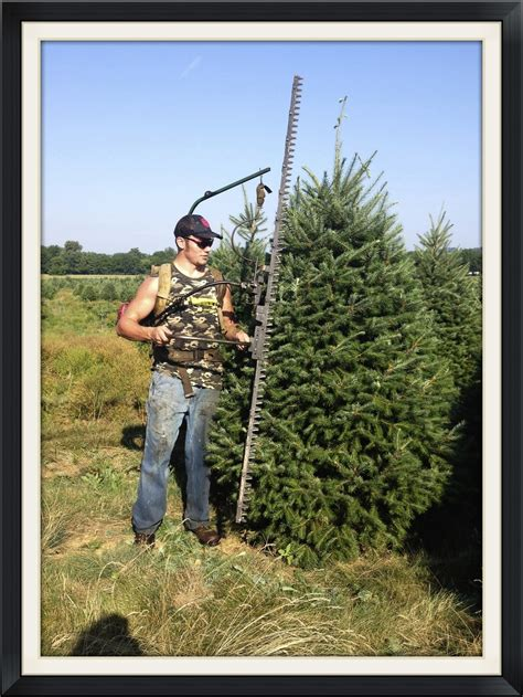 we start shearing trees in july this 60 lb saje is worn