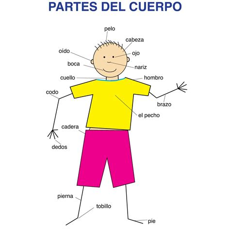 Spanish Body Parts Educational Laminated Chart