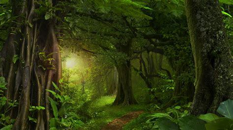 Morning Sunlight In The Green Forest 4k Ultrahd Wallpaper