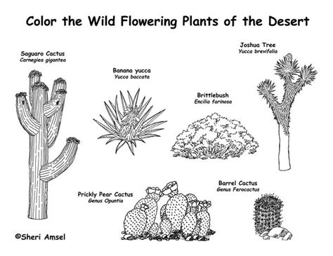 desert plants great  dioramas books projects