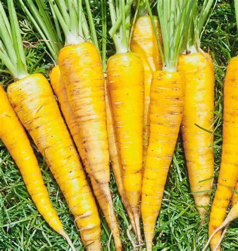 yellowstone organic carrot seeds west coast seeds