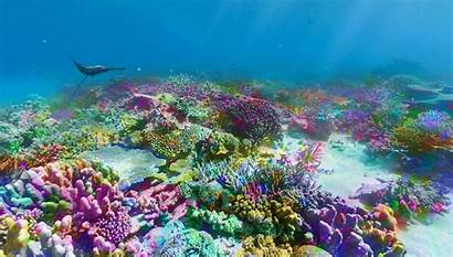 Reef Barrier Nemo Ocean Finding Gifs Giphy