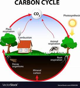 Carbon Cycle Royalty Free Vector Image
