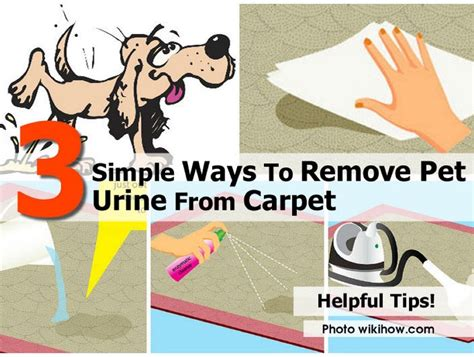 3 Simple Ways To Remove Pet Urine From Carpet