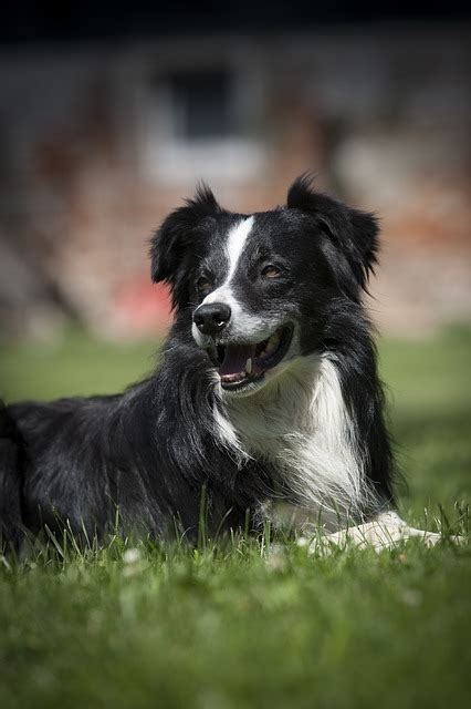 Dog Bitch Black White Free Photo Pixabay