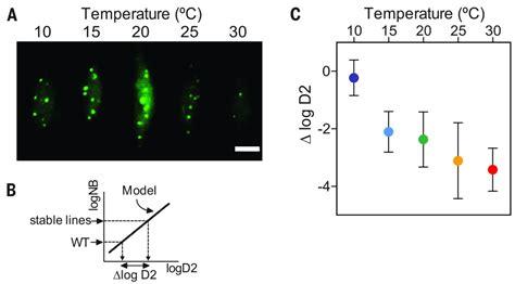 phytochrome  integrates light  temperature signals